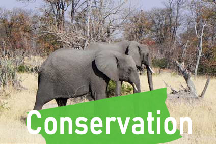 wildlife conservation safari