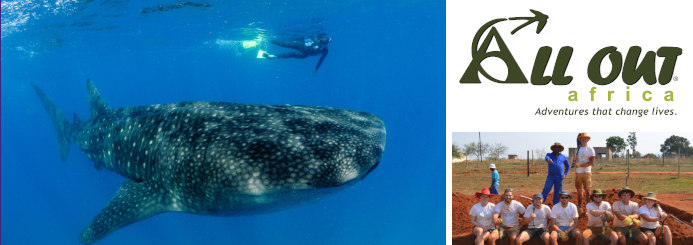 Marine Research & Whale Shark Conservation in Mozambique