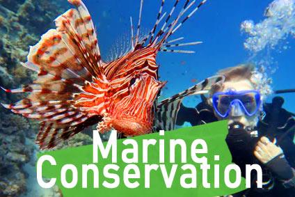marine conservation scuba diver